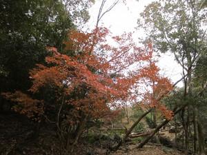 Saigahara3_500x375
