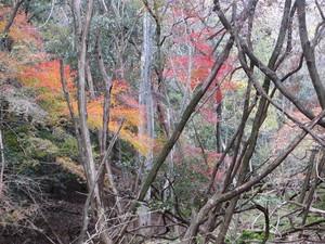 Saigahara5_500x375