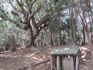 Hokoratoyamamomo_500x375